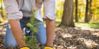 Why Hire Out Tree Removals In Central Coast