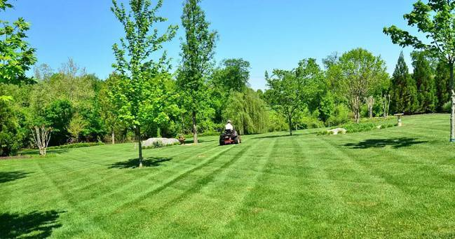Efficient Mowing Techniques For Better Looking Lawns