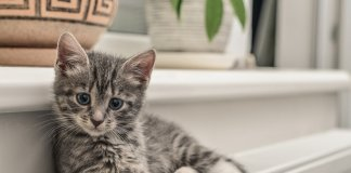 Tips For Buying The Perfect Cat Tree