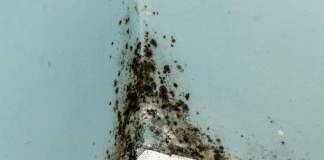 Guide to Water Damage Property Claim Lawyer