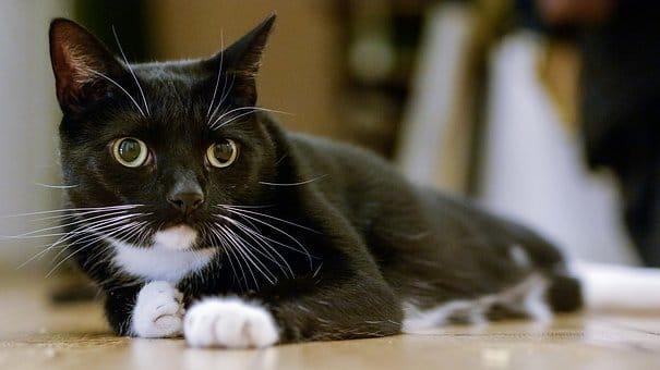 Choosing a Cat sitter