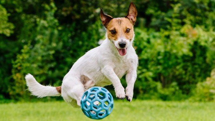 Why buy toys for your pets