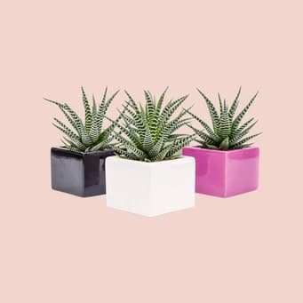 Everything to know about succulents