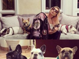 Lady Gaga's dogs Reclaimed! Video of the horrific Attack.