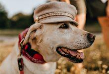 fashionable dog dresses