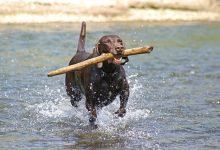 Best Athletic Dog Breeds